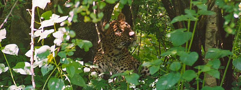 Yala National Park, Sri Lanka - Foredrag med Jan Tvernø